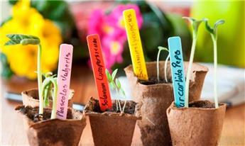 Etiquettes (20) à piquer (bleu, jaune,rose,rouge) - H10 cm