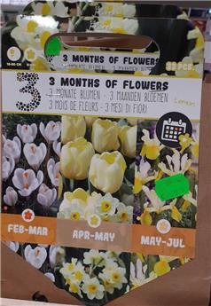 Bulbes mix 3 mois floraison Limon  (VT) ** A planter en automne **