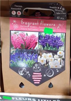 Bulbes utiles parfumé(VT) ** A planter en automne **