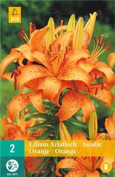 Lilium asiatic Orange * 2 pc cal.16/18