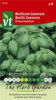VT basilic genovese