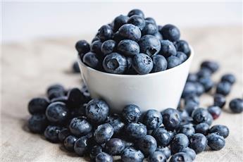 Vaccinium Blue Suede® Pot C5 - Myrtillier
