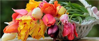 Bulbes à floraison printannière