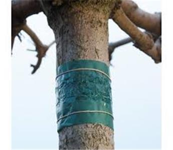 Bande de glu pour arbres