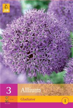 Allium gladiator * 5 pc cal.16/18