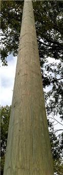 Poteau bois rond diam 12 Ht 600 cm fraisé sans pointe