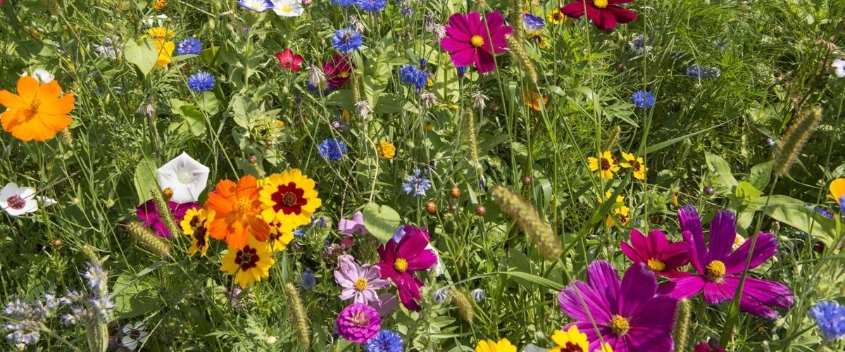 prairie fleuries